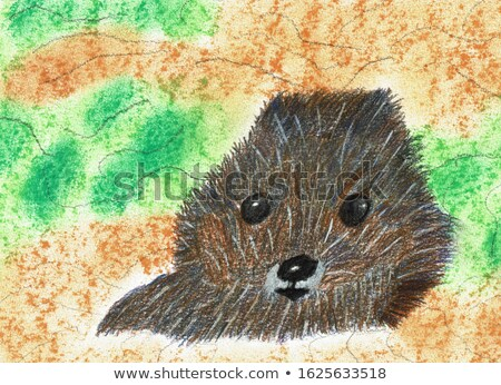 cute beaver with round body stock photo © bluering