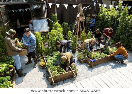Kid Girl Garden Beetroot Stock photo © lenm