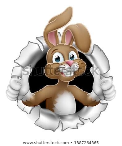 Easter bunny Paskalya bahar parti yumurta Stok fotoğraf © Krisdog