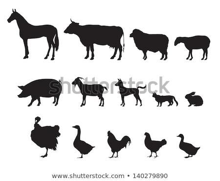 Burro animal silhuetas conjunto detalhado alto Foto stock © Krisdog