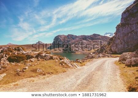 Covadonga road forest in Asturias Picos Europa Stock photo © lunamarina
