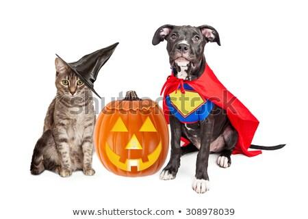 Foto stock: Bonitinho · bruxa · gato · halloween · imagem · edifício