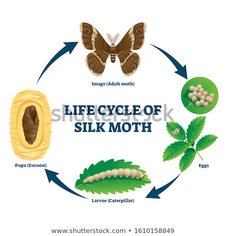 Science silkworm life cycle Stock photo © bluering