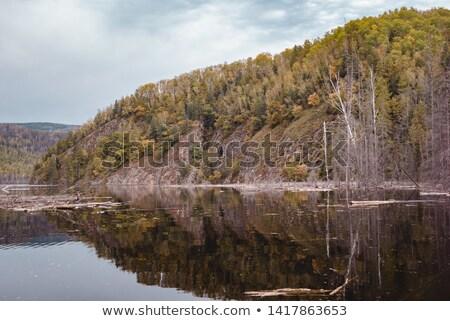 wcześnie · spadek · kolory · jesieni · drzewo · zielone · krajobraz - zdjęcia stock © mikhailmishchenko