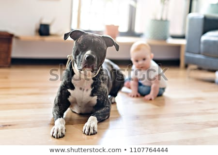 Stock photo: Baby girl sitting with pitbull on the floor