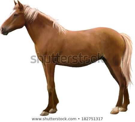 Marrón caballo ilustración blanco feliz Foto stock © robuart
