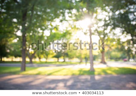 Nature sunny park with road Stock photo © dariazu