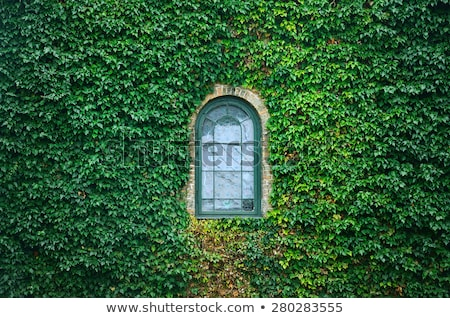 church window ivy Stock photo © unkreatives