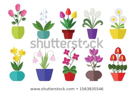 tulip flat icon stock photo © biv