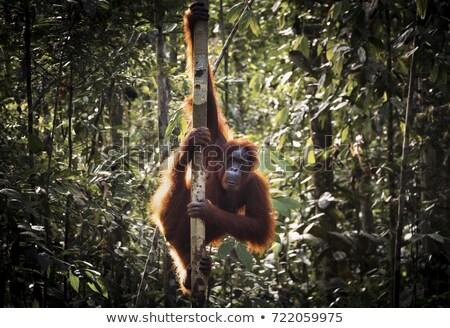 Scimmia foresta pluviale illustrazione foresta natura design Foto d'archivio © bluering
