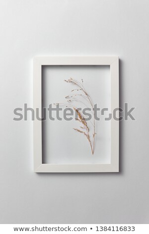 Natural organic frame with dry plant branch on a light gray background. Stock photo © artjazz