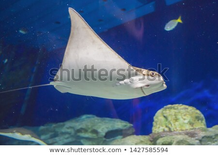 рыбы · аквариум · тропические · рыбы · коралловый · риф · фото - Сток-фото © galitskaya