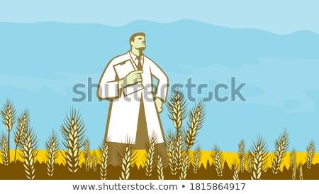 Cientista campo de trigo retro estilo retro ilustração investigador Foto stock © patrimonio