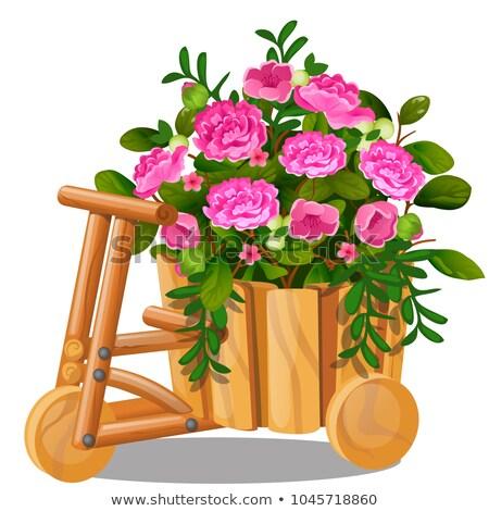 木製 カート バケット ピンク ストックフォト © Lady-Luck