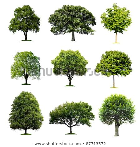 collectie · boom · geïsoleerd · witte · voorjaar · gras - stockfoto © Archipoch