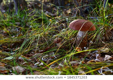 Pár gyűjt vad gombák növények mosolyog Stock fotó © photography33