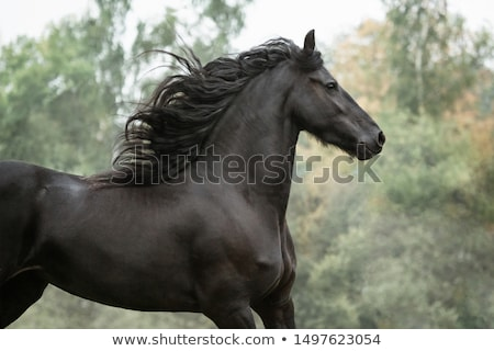 Rider with white horse Stock photo © photography33