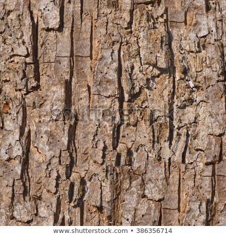 nierówny · drzewo · kory · bezszwowy · tekstury · drewna - zdjęcia stock © tashatuvango