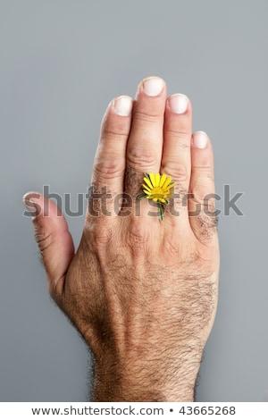 contraste · peludo · homem · mão · flor · flor · da · primavera - foto stock © lunamarina