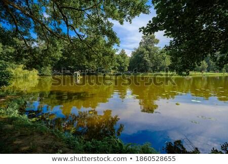 Nyugalmas tavacska buja zöld park napsütés Stock fotó © scheriton