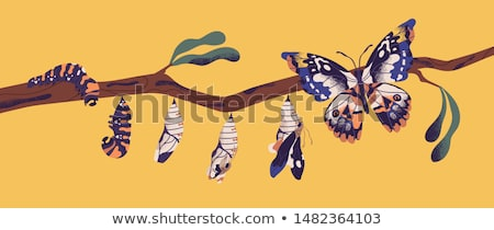butterfly cocoon stock photo © jayfish