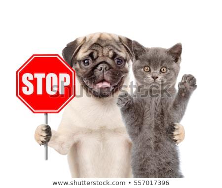 stop · állat · erőszak · stoptábla · kegyetlenség · felirat - stock fotó © nito