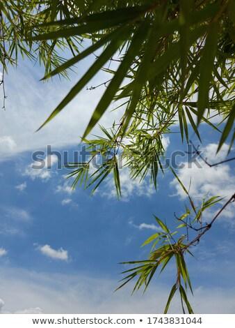 Background from brighter bamboo Stock photo © armin_burkhardt