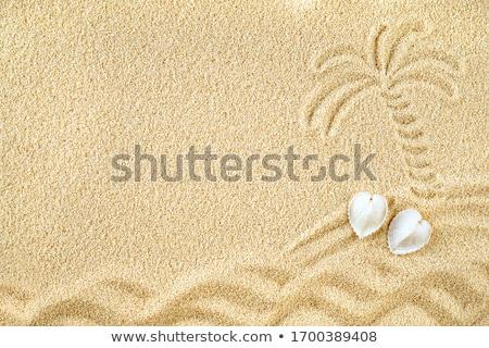 Schelpen zand eenzaam strand zomer Stockfoto © marimorena
