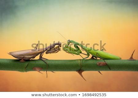 groene · insect · macro · shot · vergadering · witte - stockfoto © mikko