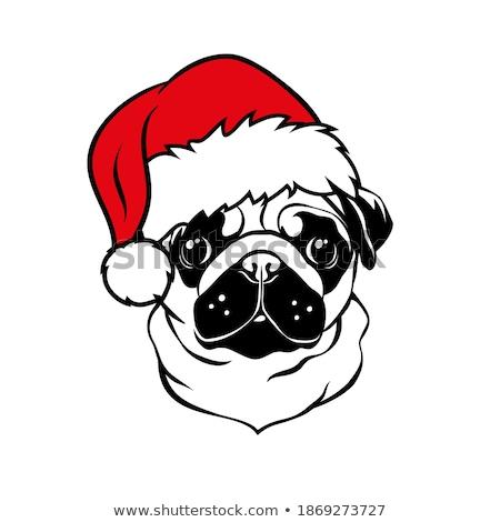 Black pug with a santa hat Stock photo © gemenacom