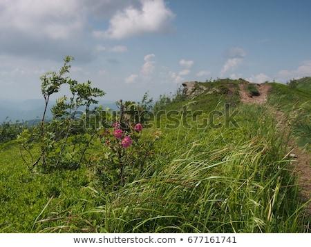 Verde montana cielo árbol hierba forestales Foto stock © pixelman