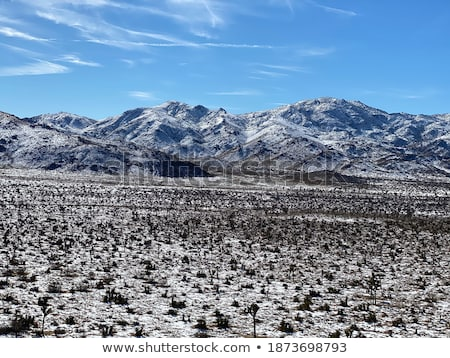 снега · пород · пейзаж · холодно · зима · утра - Сток-фото © tobkatrina