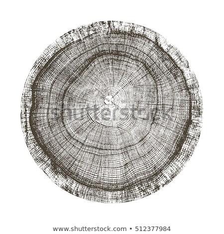 старые дерево кольца текстуры крест Cut Сток-фото © skylight