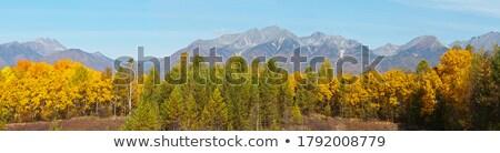 Autumn forest on the hillside Stock photo © Kotenko