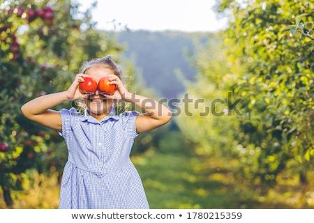 Kettő érett almák kockás piros citromsárga Stock fotó © Digifoodstock