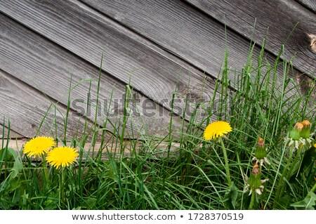 Amore estate testo fiore giallo tarassaco farfalla Foto d'archivio © orensila