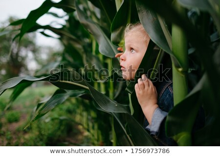 Young girl hiding in corn field Stock photo © IS2