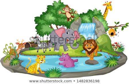 çağlayan sahne çok vahşi hayvanlar örnek su Stok fotoğraf © bluering