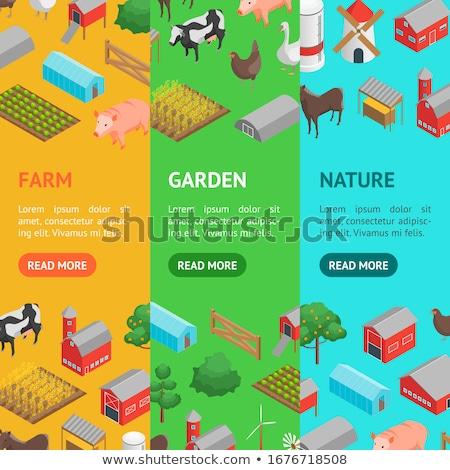 Természetes gazdálkodás izometrikus függőleges szórólapok széna Stock fotó © studioworkstock