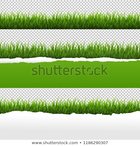 Green Grass And Ripped Paper White Background Set Stock photo © adamson