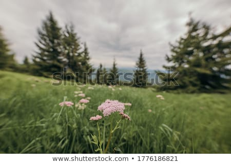 Family outdoors by tall tree smiling Stock photo © IS2