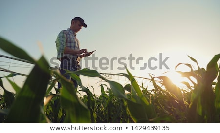 moderne · irrigatie · boerderij · veld · hemel - stockfoto © ruslanshramko