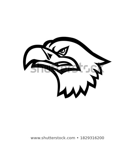 Eurasian Sea Eagle Head Mascot Stock photo © patrimonio