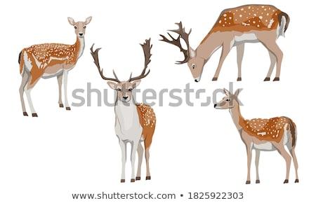 Vrouwelijke herten bos natuur achtergrond jonge Stockfoto © bdspn