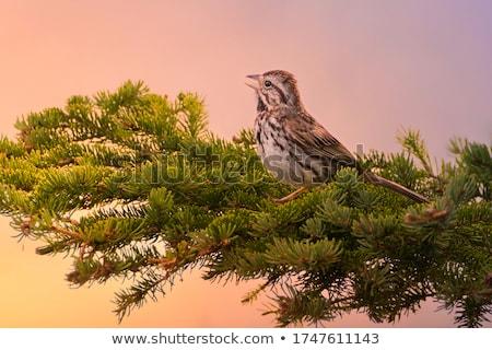 Sabah şarkı kadın genç kulaklık Stok fotoğraf © pressmaster