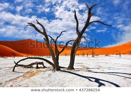 мертвых деревья парка Намибия красный песок Сток-фото © emiddelkoop
