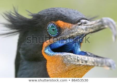 Dupla tollazat víz narancs kék toll Stock fotó © mtilghma