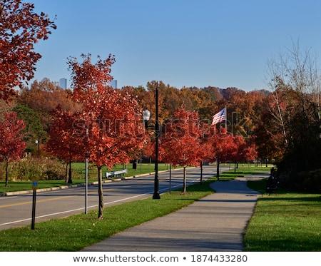 Beş ağaçlar turuncu manzara yeşil gökyüzü Stok fotoğraf © mariephoto