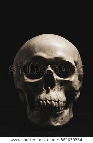 Emberi koponya copy space hamisítvány fa deszka halloween Stock fotó © stryjek