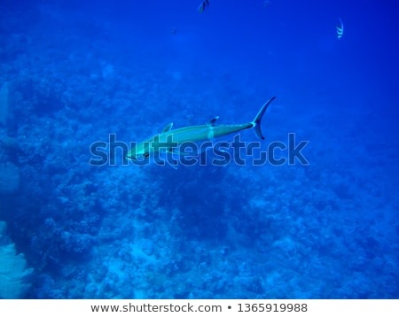 тунца воды рыбы пейзаж морем Сток-фото © stephankerkhofs